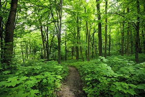 2de Pro Nature-Jardins  Paysage-Forêt