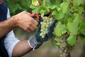 Viticulture-Oenologie